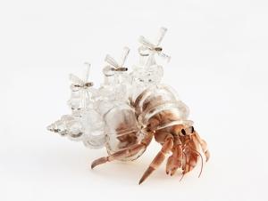Aki Inomata's Crystalline 3D Printed Hermit Crab Shells