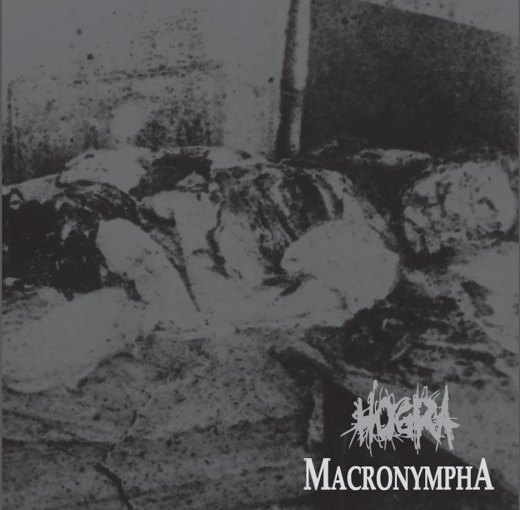 Macronympha-Hogra-Split